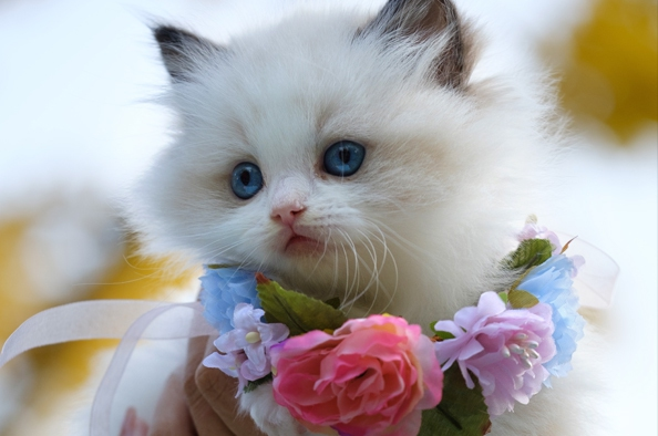 Doromboló barátaink – a macskák nemzetközi napja