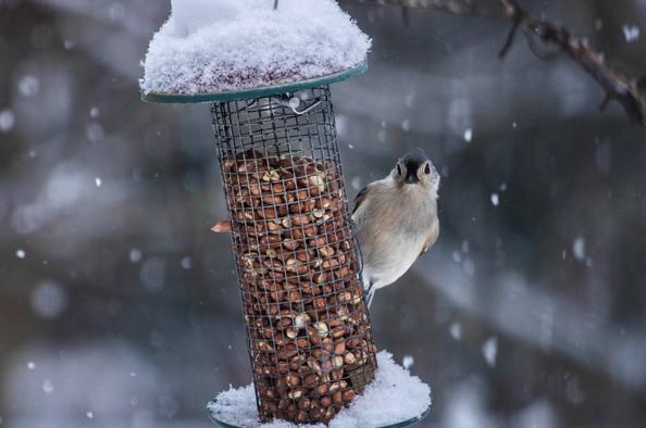 Gondoskodjunk szárnyas barátainkról – a madarak etetése télen