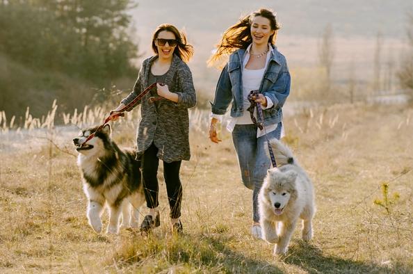 Az egész családnak jót tesz – Mozogjunk együtt a kutyánkkal!