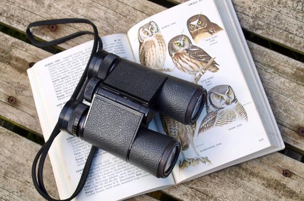 Kis szárnyas barátaink – október 2. az európai madármegfigyelő nap