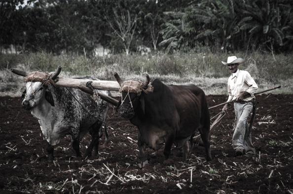 Bölcsesség és tapasztalat – október 12. az öreg gazdák világnapja