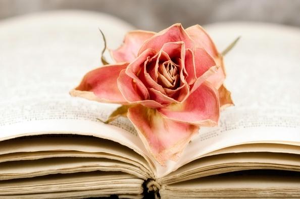 Virágok kelyhében tündérek ülnek – válogatás a legszebb nyári versekből