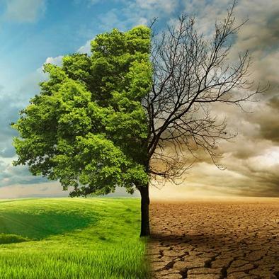 Változik az éghajlatunk – mi lesz az erdeinkkel?