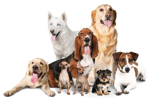 Menjünk együtt a legjobb barátunkkal - miért jók a kutyabarát helyek?