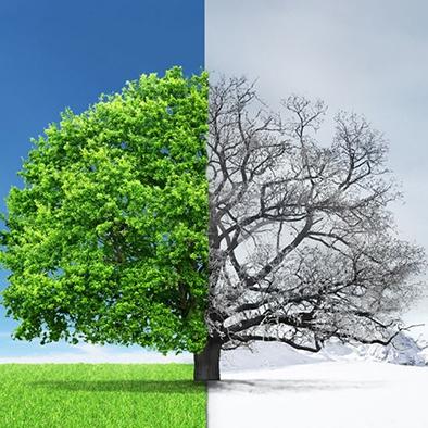 Növények télen: hogyan bírják ki tavaszig?