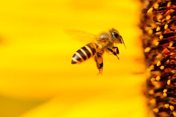 Zümmögő barátaink – méhbarát kerület lesz a Hegyvidék