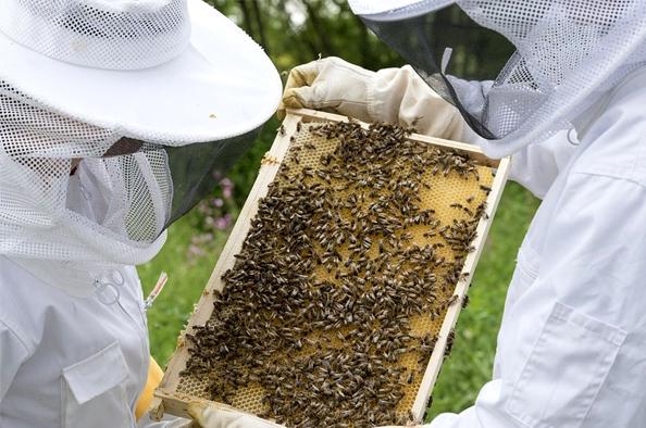 Barátainkkal vállvetve – nemzetközi együttműködés a méhek érdekében