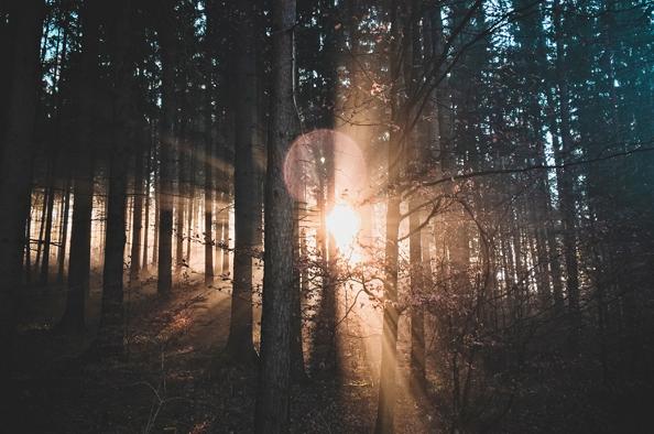 Lépjük át az erdő kapuját!