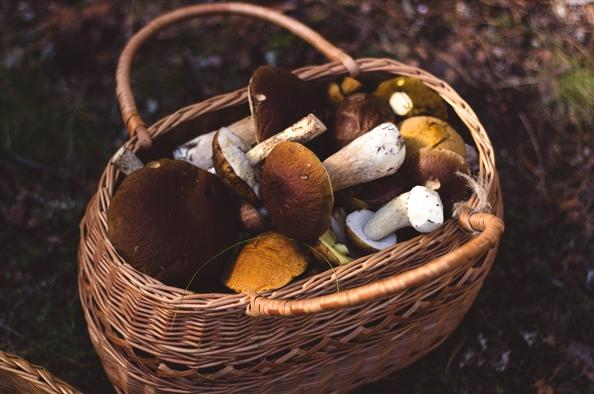 Öt érv, hogy miért együnk több gombát