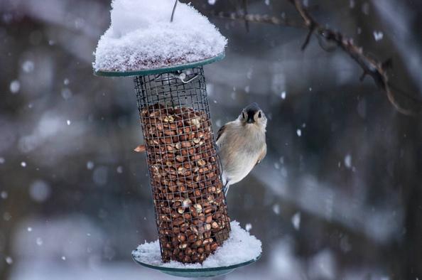 Minden, amit a téli madáretetésről tudni kell