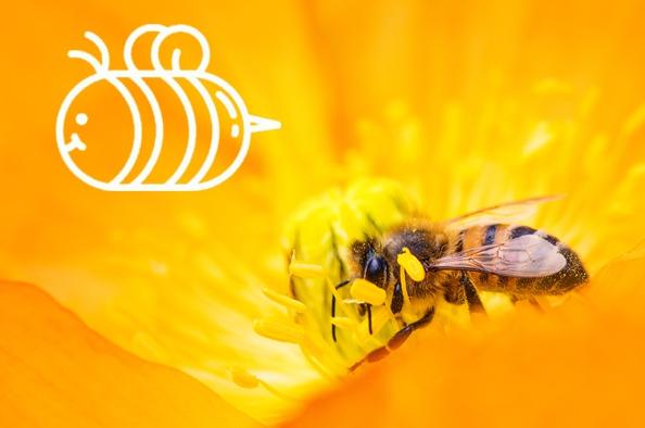 Nálunk jó méhnek lenni – Hegyvidék, a méhek Paradicsoma