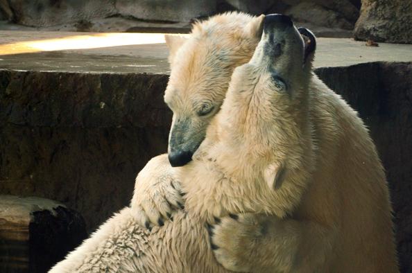 Nemzetközi jegesmedve nap – Hallgassuk meg a természet szavát!