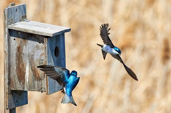 Tippek a madárbarát kerthez, erkélyhez